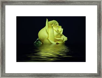 Yellow Rose II Framed Print by Sandy Keeton