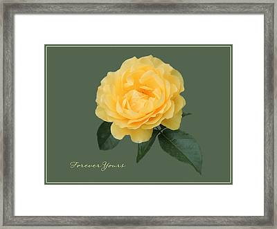 Yellow Rose Of Love Framed Print