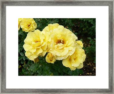 Framed Print featuring the photograph Yellow Rose Of Pa by Michael Porchik