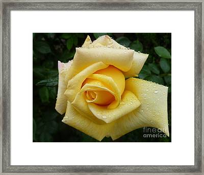 Yellow Rose Say Goodbye Framed Print
