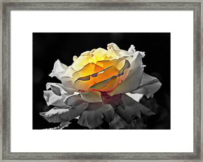Yellow Rose Series - ...but Soul Is Alive Framed Print