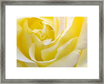 Yellow Rose Framed Print by Svetlana Sewell