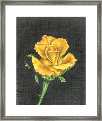 Yellow Rose Framed Print by Troy Levesque