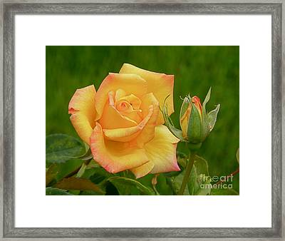 Framed Print featuring the photograph Yellow Rose With Bud by Debby Pueschel