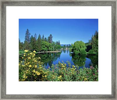 Yellow Roses By Mirror Pond Framed Print
