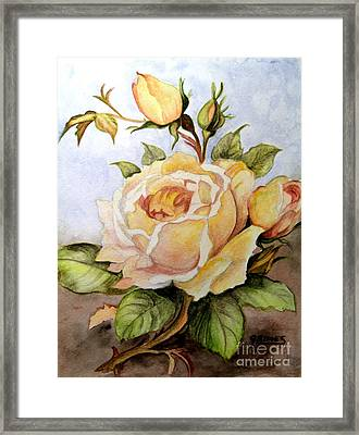 Yellow Roses In The Garden Framed Print