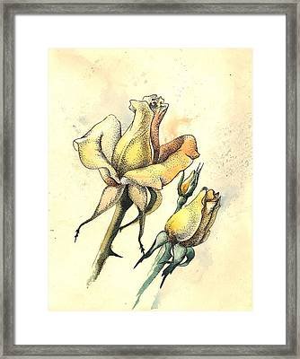 Yellow Roses In Watercolor And Stippling Framed Print