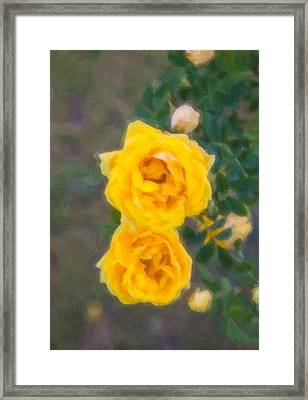 Yellow Roses On A Bush Framed Print by Omaste Witkowski