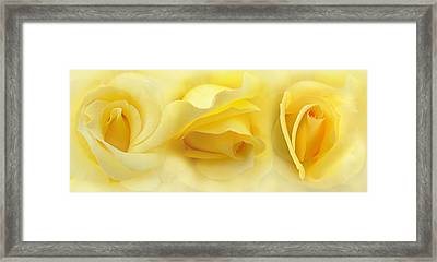 Yellow Roses Triptych Panel Framed Print by Jennie Marie Schell