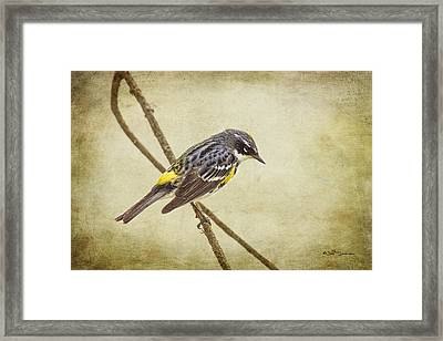 Yellow-rumped Warbler 2 Framed Print by Jeff Swanson