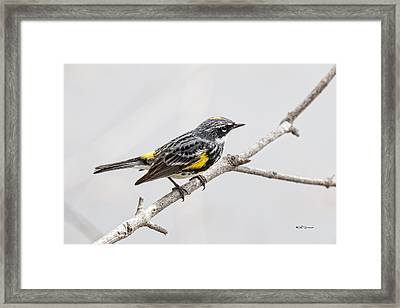 Yellow-rumped Warbler 3 Framed Print by Jeff Swanson