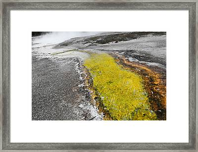 Yellow Rush Framed Print by Ritsuko Wakamatsu