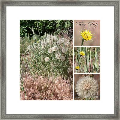 Yellow Salsify Collage Framed Print