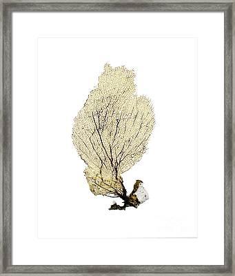 Yellow Sea Fan Framed Print by Jennifer Booher