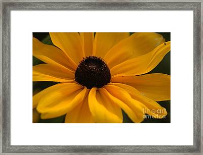 Yellow Silk Framed Print by Kathleen Struckle