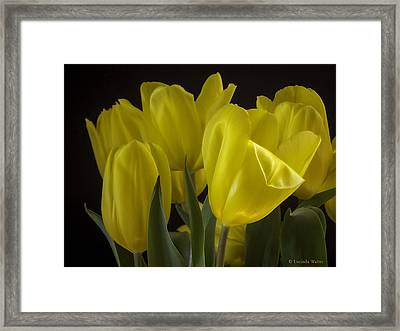 Framed Print featuring the photograph Yellow Silk by Lucinda Walter