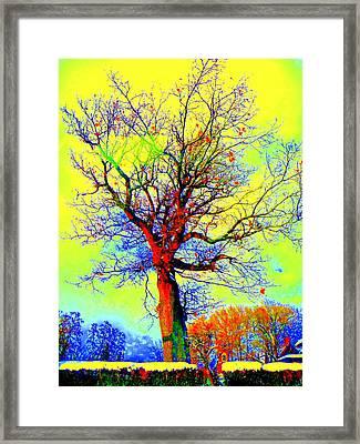 Framed Print featuring the photograph Yellow Sky by Jodie Marie Anne Richardson Traugott          aka jm-ART