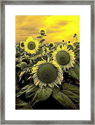 Yellow Sky Yellow Flowers. Framed Print by James Steele