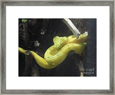 Yellow Snake Framed Print by Ann Fellows