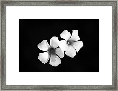 Yellow Sorrel Framed Print by Stelios Kleanthous