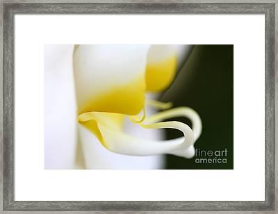 Yellow Splash Framed Print