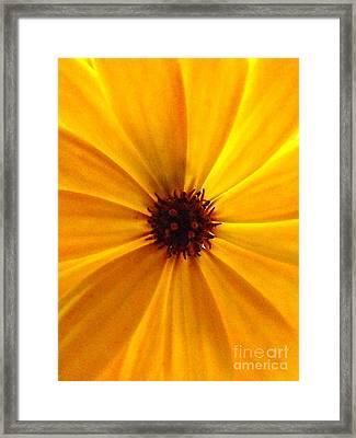 Yellow Splendour Framed Print