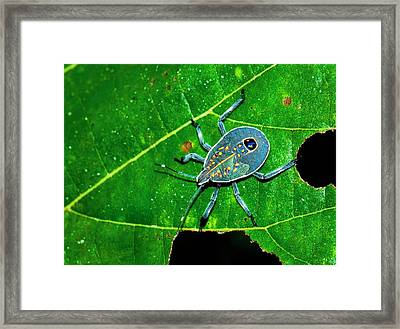 Yellow Spotted Stink Bug Framed Print by K Jayaram