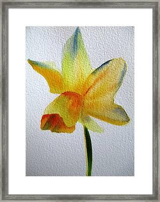 Yellow Spring Daffodil Framed Print by Sacha Grossel