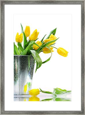 Yellow Spring Tulips Framed Print by Sandra Cunningham