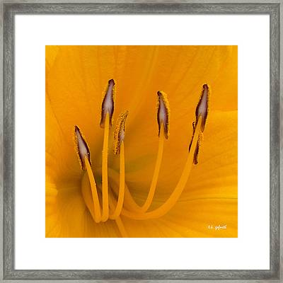 Yellow Stamens Squared Framed Print by TK Goforth