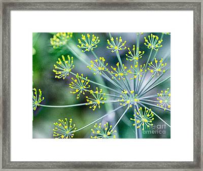Framed Print featuring the photograph Yellow Stars by JRP Photography