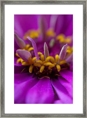 Yellow Stars Framed Print