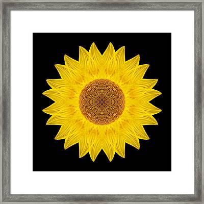 Yellow Sunflower Ix Flower Mandala Framed Print