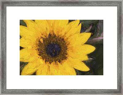 Yellow Sunflower Painterly Framed Print by Carol Leigh