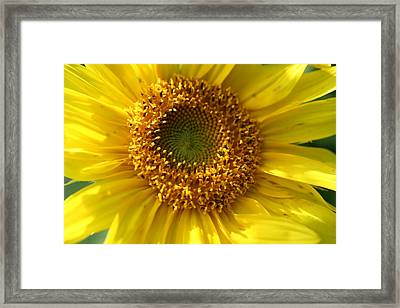 Framed Print featuring the photograph Yellow Sunshine by Neal Eslinger