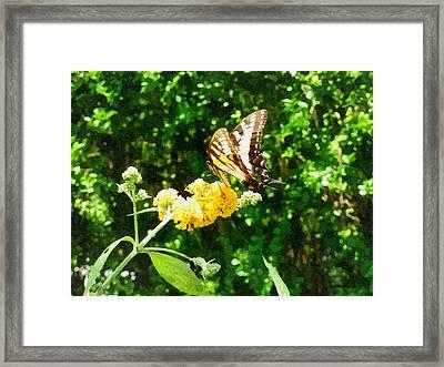 Yellow Swallowtail On Yellow Lantana Framed Print by Susan Savad