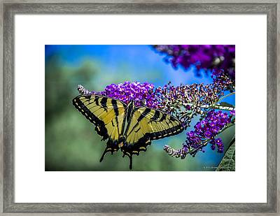 Framed Print featuring the photograph Yellow Swallowtail by Phil Abrams