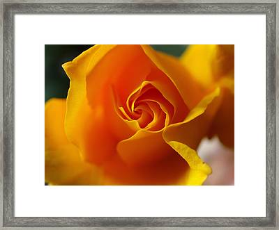 Framed Print featuring the photograph Yellow Swirl by Joe Schofield