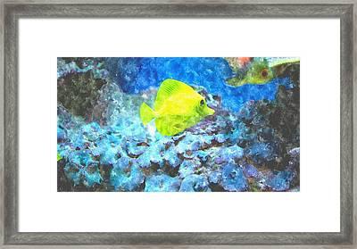Yellow Tang Of Hawaii Framed Print by Rosemarie E Seppala