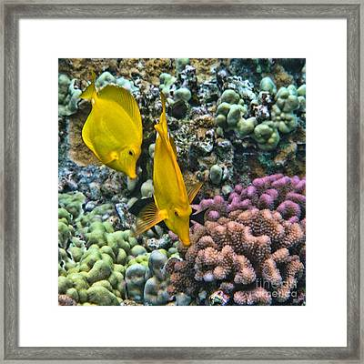 Framed Print featuring the photograph Yellow Tang Pair by Peggy Hughes