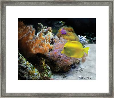 Yellow Tang Framed Print