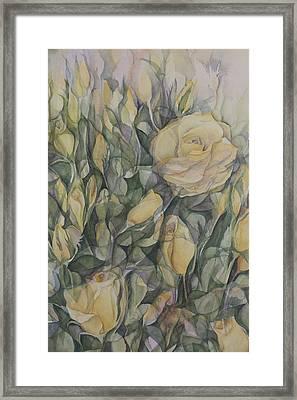 Yellow Tea Rose Closeup Framed Print