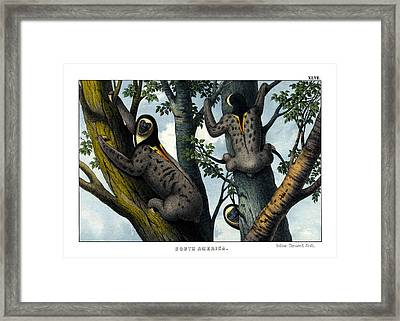 Yellow Throated Sloth Framed Print by Splendid Art Prints