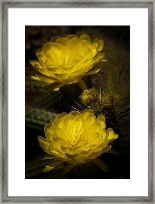 Yellow Torch Cactus  Framed Print by Saija  Lehtonen