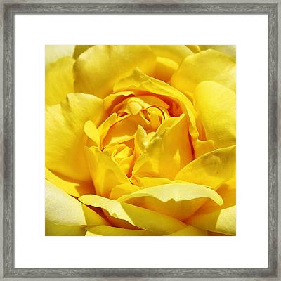Yellow Tourmaline Rose Palm Springs Framed Print by William Dey