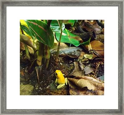 Yellow Tree Frog Framed Print