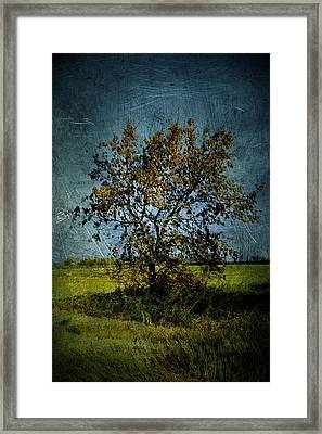 Yellow Tree Framed Print by Larysa  Luciw