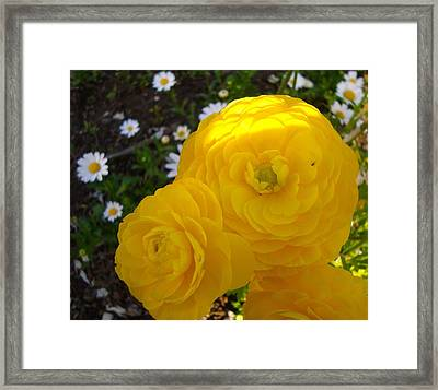 Yellow Trio With Mini Daisies Framed Print