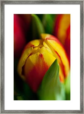 Yellow Tulip Framed Print by Sabine Edrissi