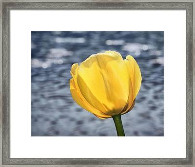 Framed Print featuring the photograph Yellow Tulip Shimmering Water by Tracie Kaska